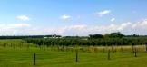Farmland and Vineyards